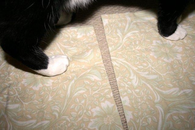 cat feet on pillowcase