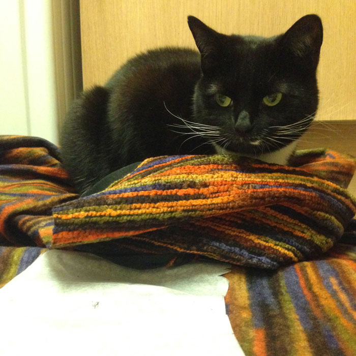 Cat on fabric