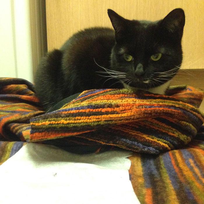 Cat on fabric